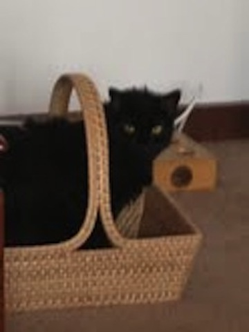 Bella_in_basket